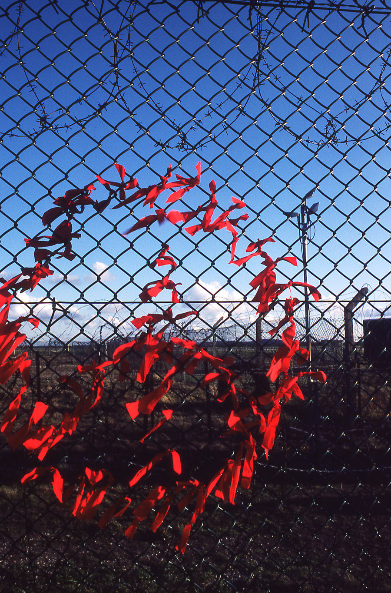 Fence decoration (Dekoracja płotu), fot. Paula Allen